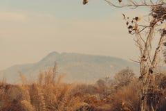 Céu acima das árvores na floresta com fundo da montanha em vi Imagens de Stock