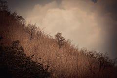 Céu acima das árvores na floresta com fundo da montanha em vi Fotografia de Stock