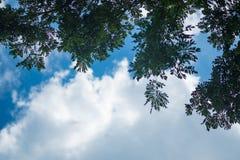 Céu acima das árvores na floresta dof raso Imagem de Stock