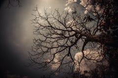 Céu acima das árvores na floresta no tom do vintage Imagens de Stock Royalty Free