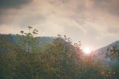 Céu acima das árvores na floresta no tom do vintage Fotos de Stock