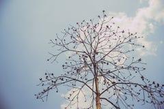 Céu acima das árvores na floresta no tom do vintage Fotografia de Stock Royalty Free