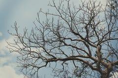 Céu acima das árvores na floresta no tom do vintage Fotografia de Stock