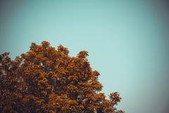 Céu acima das árvores na floresta no tom do vintage Imagem de Stock