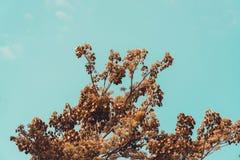 Céu acima das árvores na floresta no tom do vintage Foto de Stock