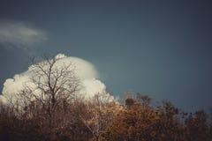 Céu acima das árvores na floresta no tom do vintage Imagens de Stock
