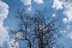 Céu acima das árvores na floresta no tom do vintage Foto de Stock Royalty Free