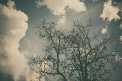 Céu acima das árvores na floresta no tom do vintage Fotos de Stock Royalty Free