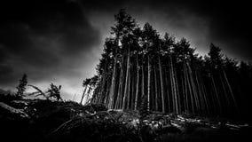 Céu assustador de Forest At Dusk Under Cloudy imagens de stock royalty free