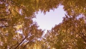 Céu através da floresta do outono vídeos de arquivo