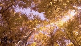 Céu através da floresta do outono video estoque