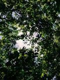 Céu através das árvores Fotos de Stock Royalty Free