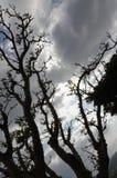 Céu através das árvores fotografia de stock