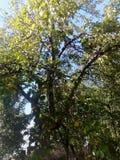 Céu através dos ramos de árvore Fotografia de Stock Royalty Free