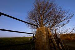 Céu azul, árvore e porta no parque nacional do distrito máximo, Reino Unido Foto de Stock
