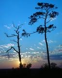 Céu azul Fotografia de Stock Royalty Free