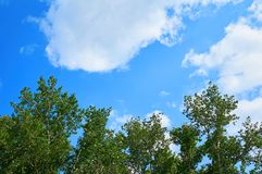 Céu azul bonito com nuvens contra um fundo de árvores verdes Imagens de Stock Royalty Free