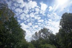 Céu azul bonito com nuvens e árvores Fotos de Stock