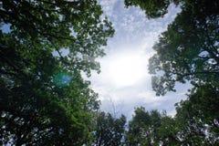 Céu azul bonito com nuvens e árvores Fotografia de Stock Royalty Free