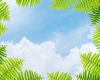 Céu azul bonito do close up no centro do quadro pelas folhas verdes da samambaia isoladas no fundo branco Imagens de Stock