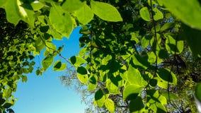 Céu azul bonito e folha verde Imagens de Stock Royalty Free