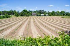 Céu azul bonito enorme Sunny Day de campo de exploração agrícola Imagens de Stock