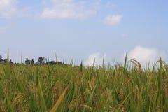 Céu azul bonito, nuvens brancas e exploração agrícola Fotos de Stock