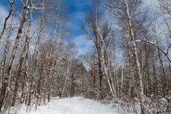 Céu azul brilhante, nuvens brancas e neve fresca na floresta imagens de stock