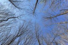Céu azul claro sobre o prado pequeno na floresta da mola Imagens de Stock