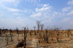 Céu azul claro sobre um savana africano Fotos de Stock