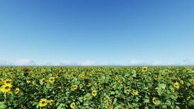 Céu azul claro Um campo dos girassóis filme