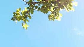 Céu azul com árvores video estoque