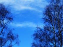 Céu azul com as árvores no primeiro plano Imagens de Stock Royalty Free