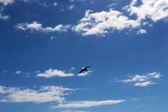 Céu azul com nuvens brancas Fotografia de Stock Royalty Free