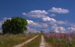 Céu azul com nuvens e a estrada brancas através do prado Imagem de Stock