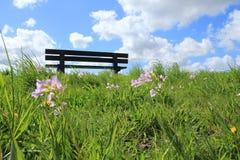 Céu azul com nuvens e flores de cuco na grama no parque na mola Imagens de Stock Royalty Free