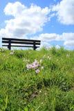 Céu azul com nuvens e flores de cuco na grama no parque na mola Fotos de Stock
