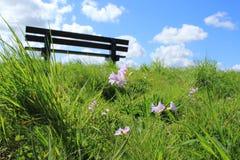 Céu azul com nuvens e flores de cuco na grama no parque na mola Imagens de Stock