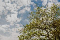Céu azul com nuvens fundo e textura foto de stock royalty free
