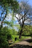 Céu azul com nuvens, um banco de madeira, um escaninho waste e as árvores no parque na mola Imagem de Stock
