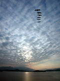 Céu azul com o pássaro no teste padrão fotografia de stock royalty free