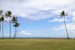 Céu azul com palmeira Fotografia de Stock Royalty Free
