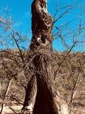 Céu azul da árvore exterior Foto de Stock