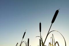 Céu azul da estação de tratamento de água com luz solar amarela plantas da silhueta Fotografia de Stock