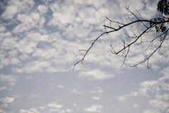 Céu azul da manhã e árvore ded fotografia de stock