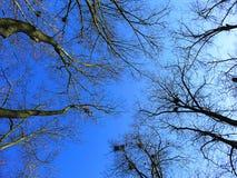 Céu azul da mola Fotos de Stock Royalty Free