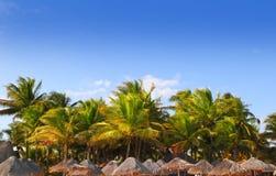 Céu azul das palmeiras tropicais maias do sunroof de riviera Imagem de Stock