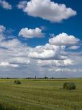 Céu azul de campo de trigo Fotografia de Stock Royalty Free