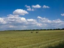 Céu azul de campo de trigo Fotografia de Stock