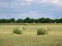 Céu azul de campo de trigo Imagem de Stock Royalty Free